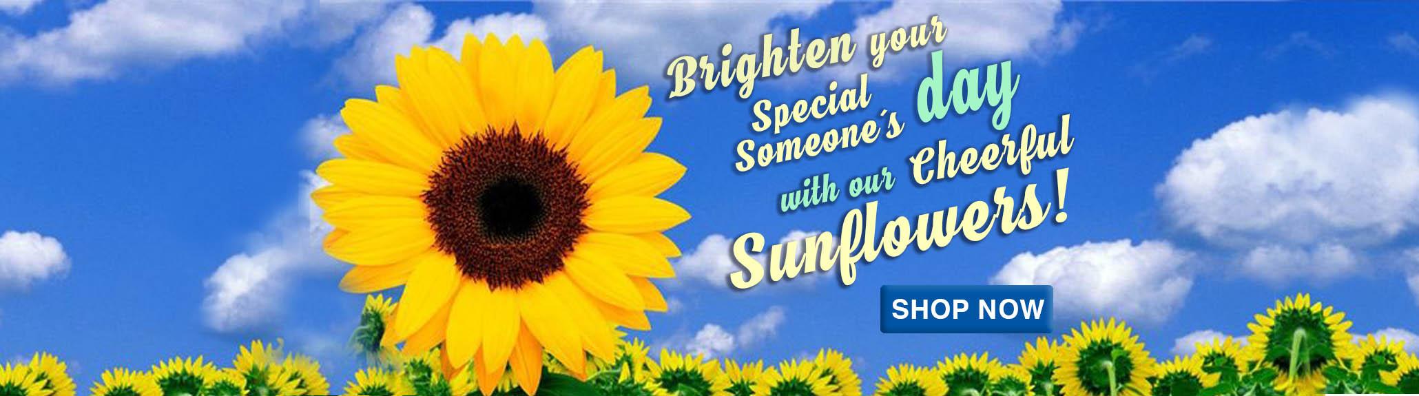 sunflower-banner-philippines.jpg