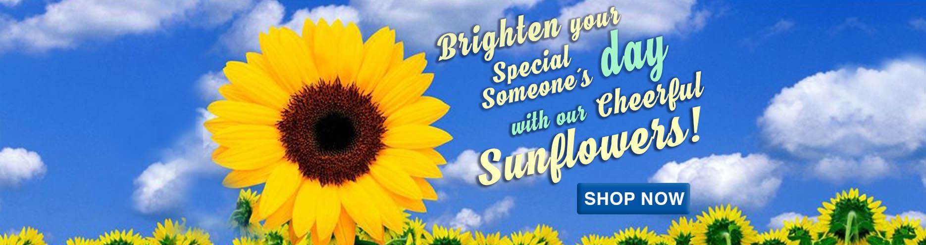 sunflowerheadercat.jpg