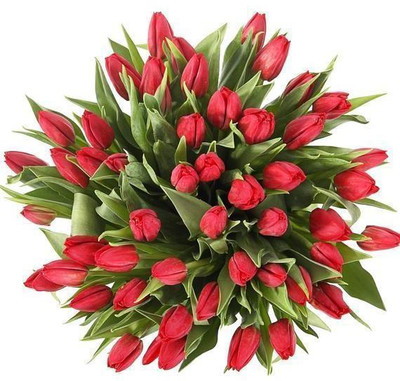 40 Red Tulips Giant Bouquet