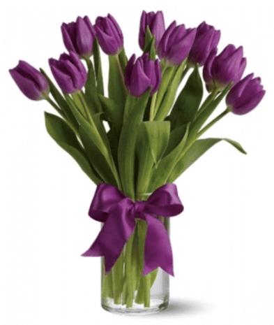10 Violet Tulips