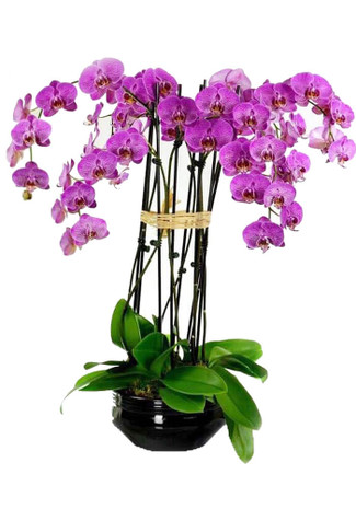 Orchids Oasis