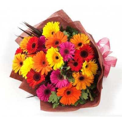 20 Assorted Gerbera Daisies