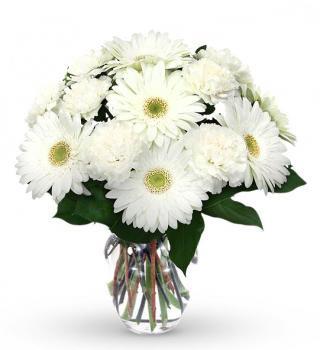 20 White Gerberas & Carnations
