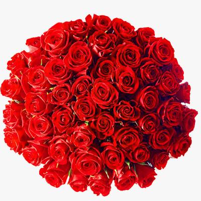 50 Ecuadorian Roses Giant Bouquet