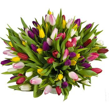 50 Tulips Grand Bouquet