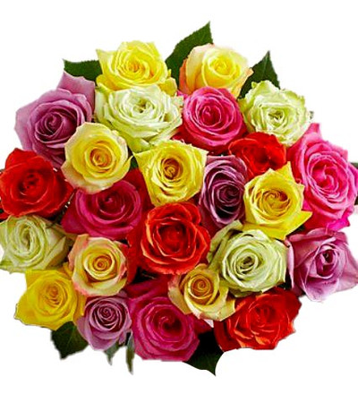 12 assorted colors Ecuadorian Roses