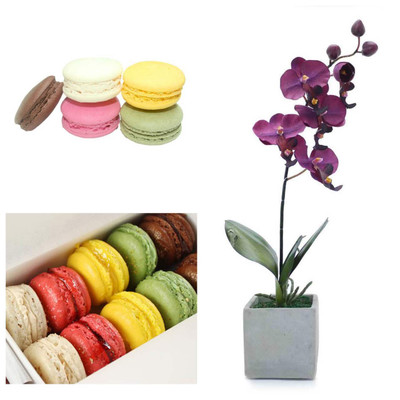 Orchid and Macarons Package