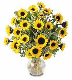 24 Sunflowers Giant Bouquet