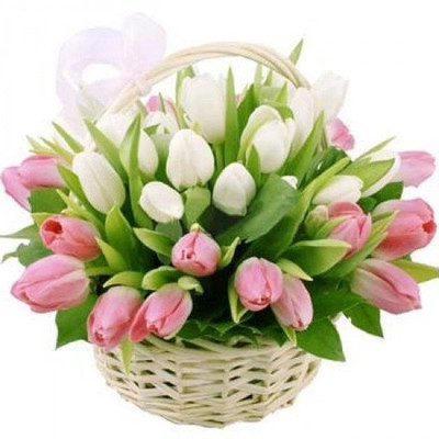 White & Pink Holland Tulips Basket