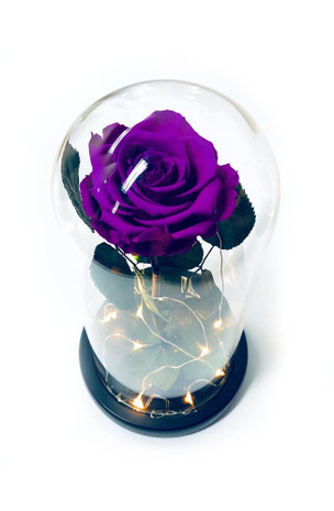 Violet Preserved Rose Fairy Lights Dome