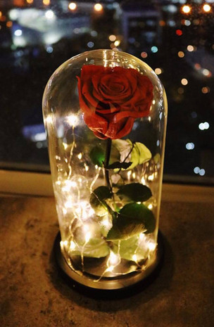 Red Preserved Rose Fairy Lights Dome