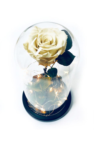White Preserved Rose Fairy Lights Dome