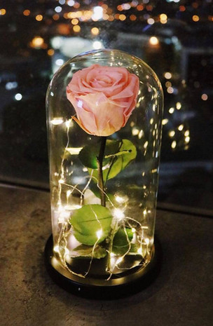 Pink Preserved Rose Fairy Lights Dome
