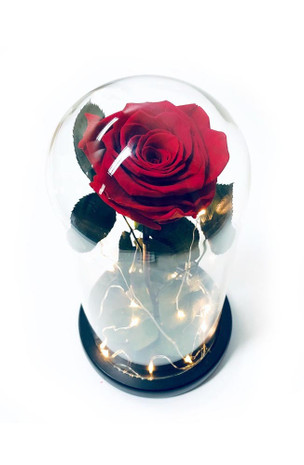 Red Preserved Rose Fairy Lights Dome - Best Seller!