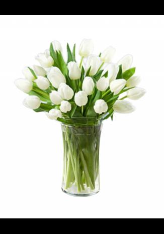 20 White Tulips