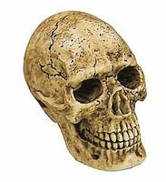 ACI - Skull