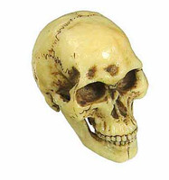 Death (Red) - Human Skull (Moving Jaw)