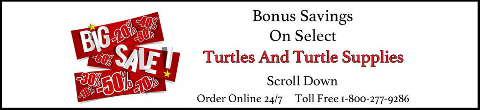 bonus-save-x-mas-turtles.jpg