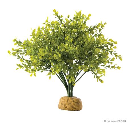 Exo Terra Boxwood Plant