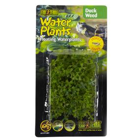 Exo Terra Duck Weed