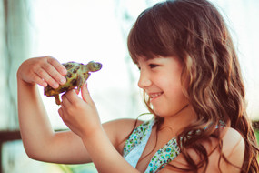 Juvenile Russian Tortoise