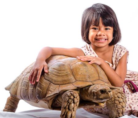 Adult Male Sulcata Tortoise for sale