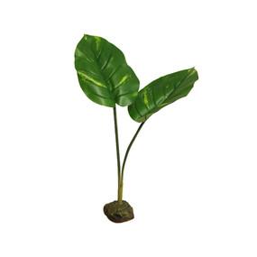 Scindapsus Plant