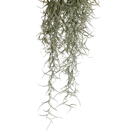 Exo Terra Spanish Moss for turtle and tortoise tanks.