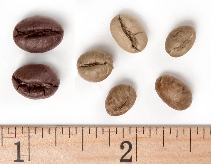 Peaberry Robusta beans