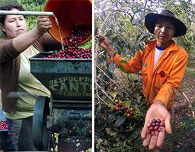 peruvian-farmer275.jpg