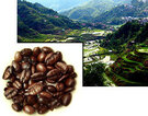 Mountainous region of the Philippines where Liberica is grown ##for 8oz##