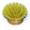 DISHY REPLACEMENT BRUSH HEAD 40MM