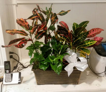 The Bloom Closet's Assorted Plant Garden