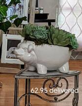 Little Piggie Succulents Container
