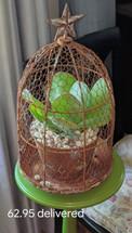 Antique Bird Cage Flower Pot with Succulent