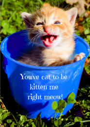 "Super cute kitty magnet says, ""You've cat to be kitten me right meow!""  You can't read this magnet without smiling!   The photo on this magnet, along with all the other magnets, were taken by our own family (99% by our now 20 year old daughter, Carissa!).    Magnet size: 2.5'' x 3.5'' Sturdy.  Called a"
