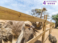 Private Accessible 4.5 hour Curacao, Dinah Verris Herb Garden and Ostrich Farm excursion