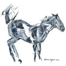 Horses - Cavallo - Black Buck