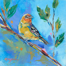 Western Tanager in Blue