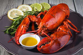 """12 Pack """"One Pound and a Quarter"""" Size (1.20lb-1.40lb each) HARD SHELL MAINE LOBSTER"""