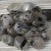 Black Tourmaline in Quartz Tumbled Stones, Tourmalinated Quartz