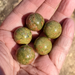 "1"" Unakite Spheres, 25mm"