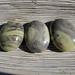 Serpentine Palm Stones