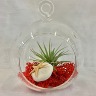 Air Plant Terrarium With Red Moss - Lg