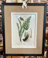 Botanical Fern Picture
