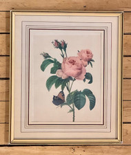 Vintage Print Rose & Butterfly