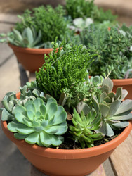 Mom's Succulent Garden Bowl