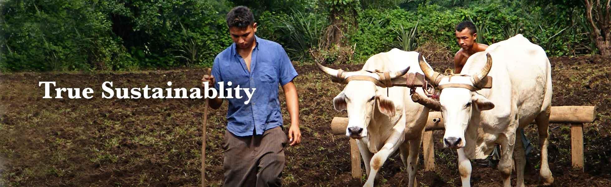 maggies-organics-sustainability-process-2.jpg