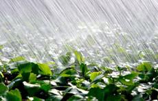 Fragrance Refills - Rain
