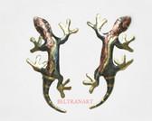 Lizards-069